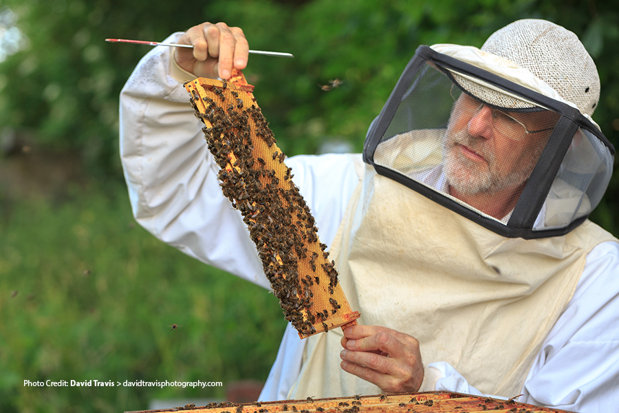 Nick-beekeeping-copy.jpg